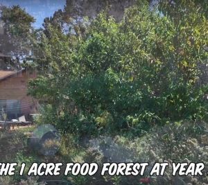 1 Acre Food Forest